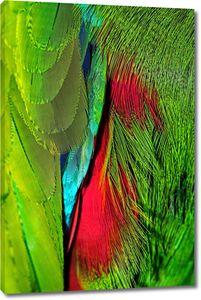 Яркие перья попугаев