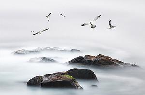 Чайки над камнями
