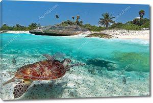 Карибское море пейзажи с Зеленая черепаха