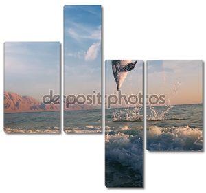 Восхода и Дельфин, прыгая из морской поверхности
