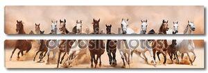 Табун лошадей, работающие на песчаной бури
