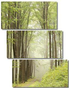 Тропа через туманный буковый лес