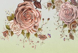Два больших бутона роз