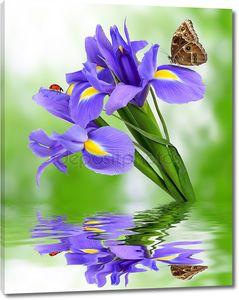 цветок фиолетовый ирис