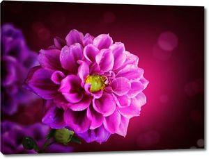 Красивые цветочные fiower