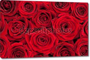 Фон из красивых красных роз