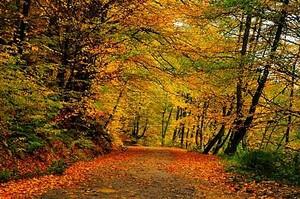 Лесная дорога, покрытая листья в начале осени