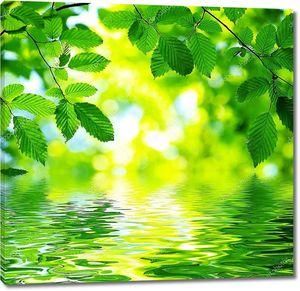 Листья над водой