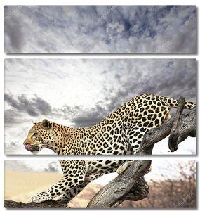Леопард на фоне пасмурного неба