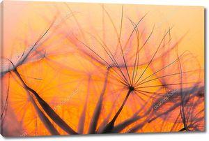 Семена одуванчика на фоне заката небо