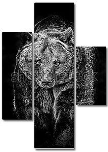 Большой бурый медведь