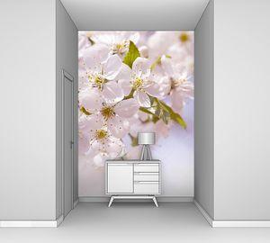Розовые цветки цветущей вишни