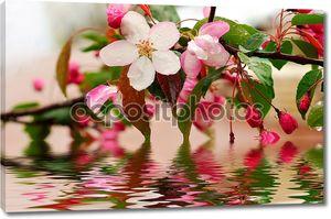 Цветущие цветы Сакура в воде