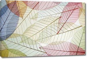 Скелетные листья