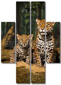 Семья ягуаров