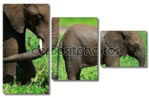 слоны.