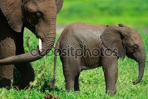 Слоны в национальном парке