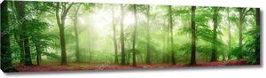 Туманные леса Панорама с мягкими лучами света