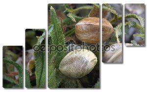 Три семена конопли на сушеные каннабиса листья