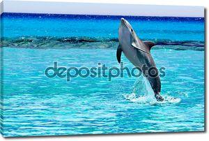 Дельфин прыжки Карибского моря