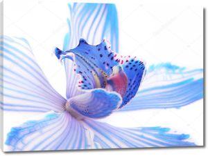 Экзотическая голубая орхидея