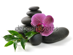Орхидея и камни на белом фоне