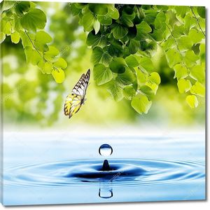 Бабочка над каплей воды