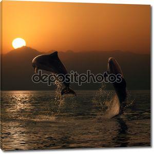 Oceanview два красивых дельфины прыгали от моря