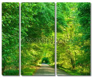 Зеленый тоннель дороги