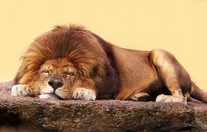 сон льва