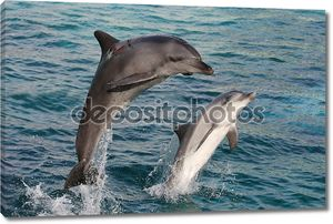 Лук Прыжок дельфина.
