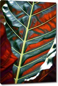 Лист с красными прожилками
