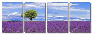 Панорамный вид на лавандовое поле с деревом