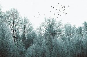 Стая кружит над лесом