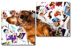 Милая собака среди фотографий
