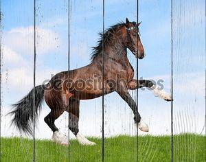 Залив лошадь галопом
