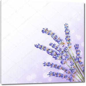 Свежие лавандовые цветы