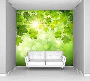 Зеленые листья клена