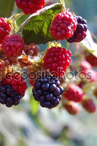 Освежающие летние фрукты фон