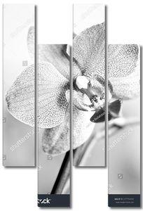Прекрасный цветок в черно-белом цвете