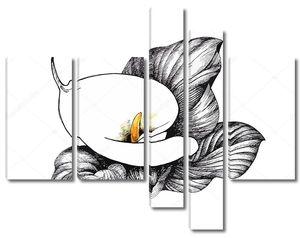 Калла Лили цветочные, черно-белые иллюстрации фона