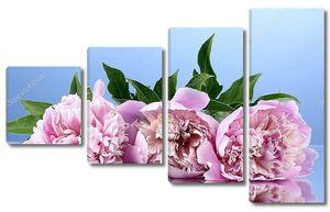 Три Розовых пиона на синем фоне