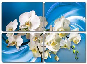 Орхидеи на голубом