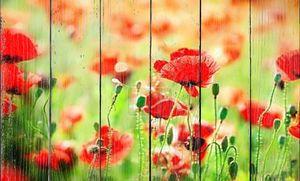цветок мака на лугу