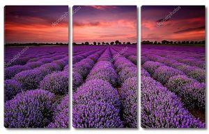 Пейзаж с полем лаванды на закате