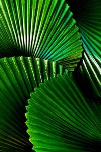 Крупно пальмовые листы