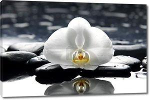 Натюрморт с орхидеей