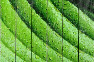 фон линий на зеленые листья с макро капли