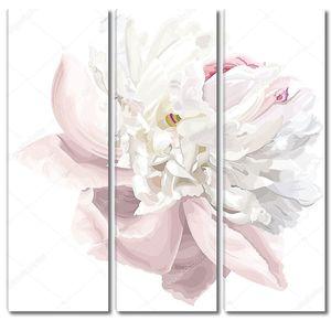 белый цветок пиона