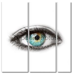 Красивый синий человеческий глаз